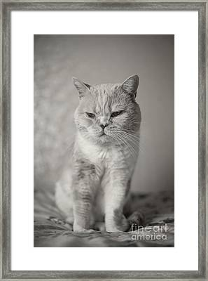 Framed Print featuring the photograph Handsome Cat by Aiolos Greek Collections