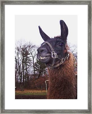 Handsome Devil Framed Print by Anna Villarreal Garbis