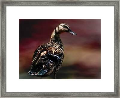 Handsome Duck Framed Print