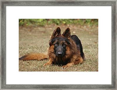 Handsome Fella Framed Print by Sandy Keeton
