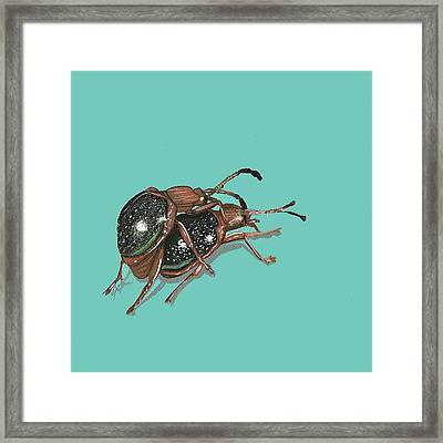 Handsome Fungus Beetles Framed Print