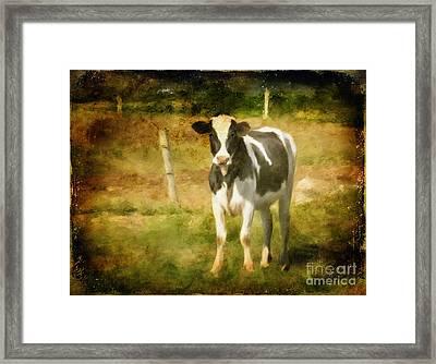 Handsome Holstein Framed Print by Lois Bryan