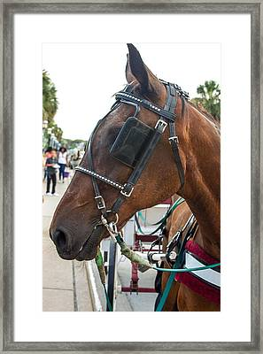 Handsome Horse Framed Print by Kendall Tabor