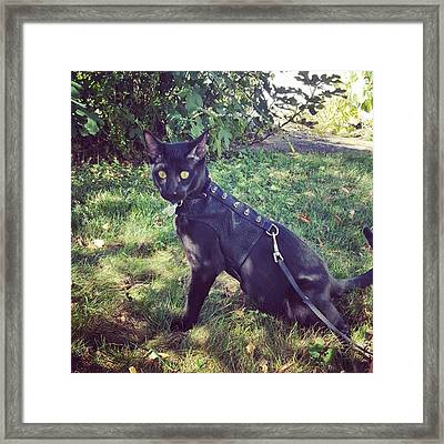 Handsome Man Striking A Pose Framed Print