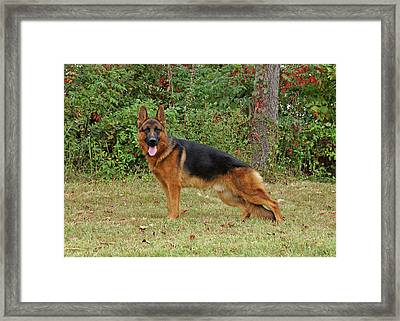 Framed Print featuring the photograph Handsome Rocco by Sandy Keeton