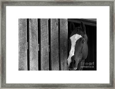 Handsome T Framed Print