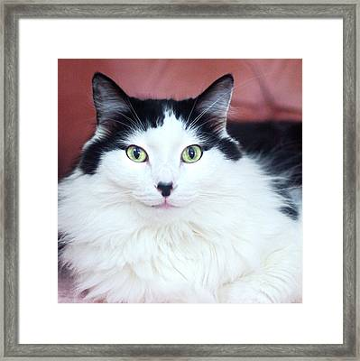 Framed Print featuring the photograph Handsome Tuxy by Byron Varvarigos