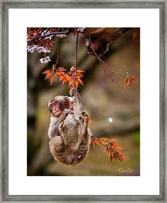 Framed Print featuring the photograph Hang In There, Baby Redux by Rikk Flohr