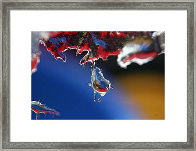 Hang In There Framed Print by Rachelle Johnston