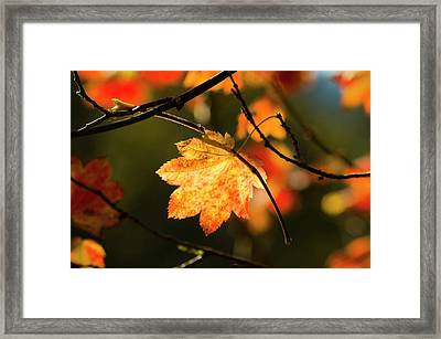 Hang In There Framed Print