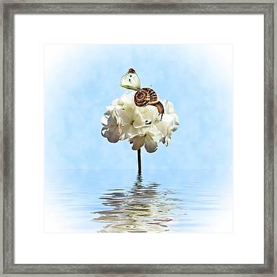 Hang On Framed Print by Sharon Lisa Clarke