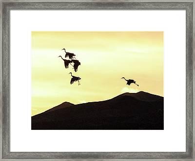 Hang Time Framed Print