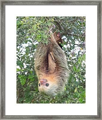 Hangin In Costa Rica Framed Print by Betsy Knapp