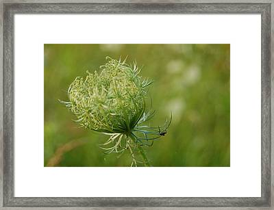 Hangin On Framed Print by Beverly Hammond