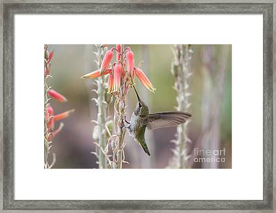 Hanging Around Framed Print by Tracey Hunnewell