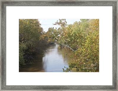 Hanging Branch Framed Print by Amy Wilkinson