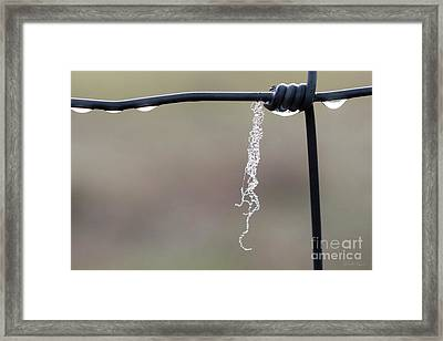 Framed Print featuring the photograph Hanging By A Thread by Linda Lees