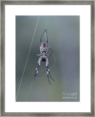 Hanging By A Thread Framed Print by Phil Banks