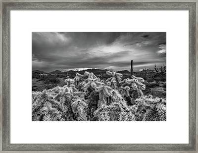 Hanging Chain Cholla Framed Print by Joseph Smith
