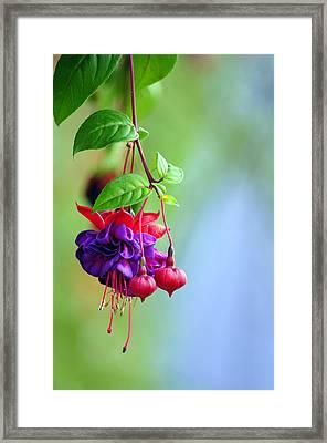 Hanging Gardens Fuschia Framed Print