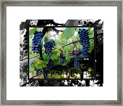 Hanging Grapes Framed Print by Dorothy Berry-Lound