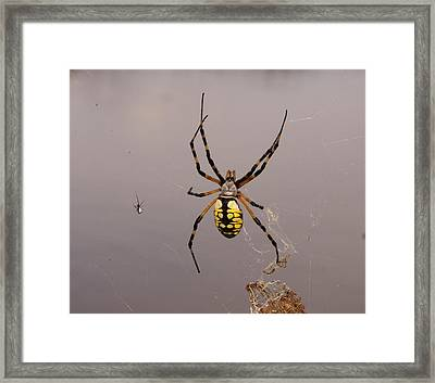 Hanging In There Framed Print by Debbie May