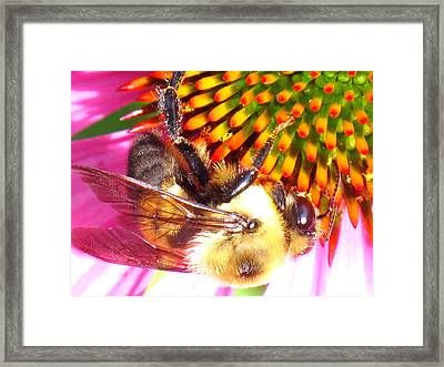 Hanging In There Framed Print by Ian  MacDonald