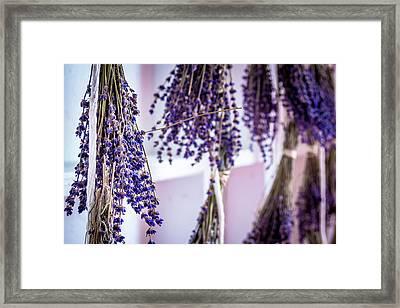 Hanging Lavender Framed Print