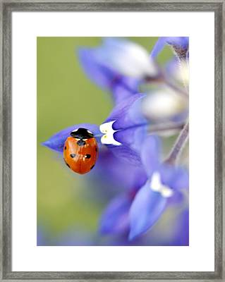 Hanging On A Petal Framed Print by Danielle Miller