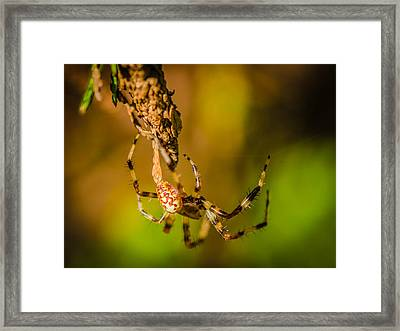 Hanging On A Thread Framed Print