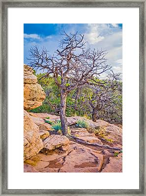 Hanging On For Dear Life - Canyon De Chelly National Monument Photograph Framed Print by Duane Miller