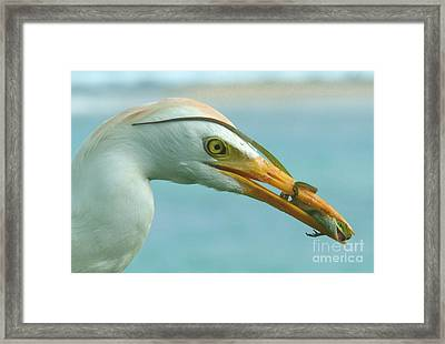 Hanging On For Dear Life Framed Print by Terri Thompson