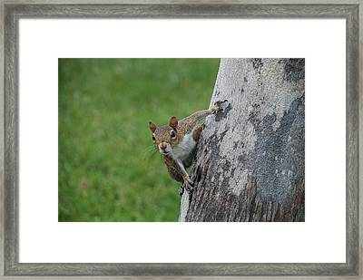 Framed Print featuring the photograph Hanging On by Rob Hans