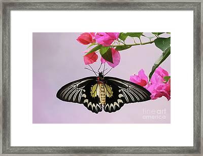 Hanging On V2 Framed Print