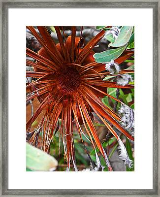 Hanging Onto Beauty Framed Print by Elizabeth Hoskinson