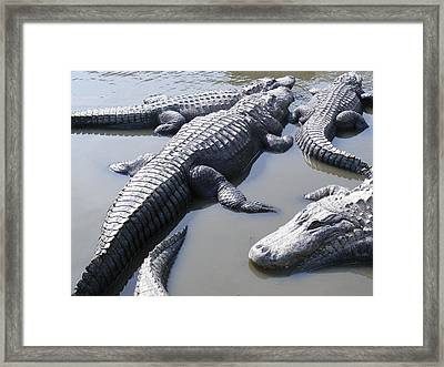 Hanging Out Alligators North Myrtle Beach Photograph By