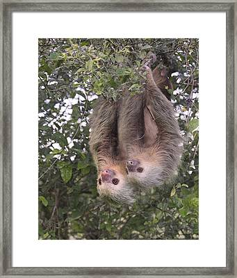 Hanging Out Framed Print by Betsy Knapp