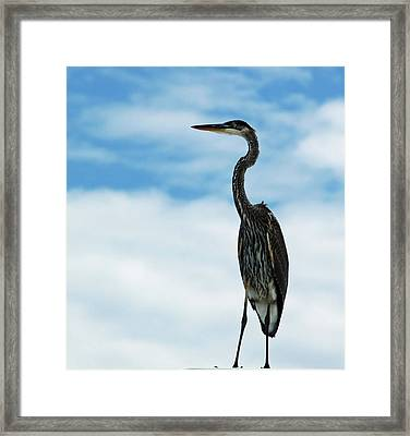 Hanging Out Framed Print by Diane Luke