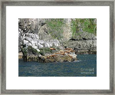 Hanging Out In Alaska Framed Print