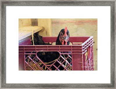 Hanging Out Framed Print by Jennifer Craft