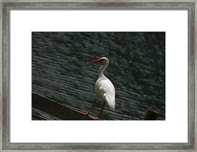 Framed Print featuring the photograph Hanging Out by Michael Albright