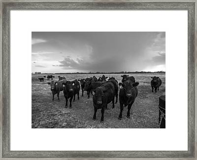 Hanging Out Framed Print by Sean Ramsey