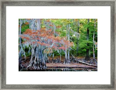 Hanging Rust Framed Print by Lana Trussell
