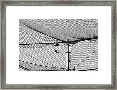 Hanging Sneakers Framed Print by Leah McPhail