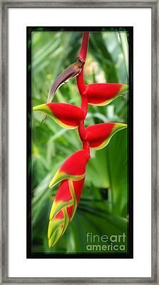 Hanging Tropical Splendor Framed Print by Sue Melvin