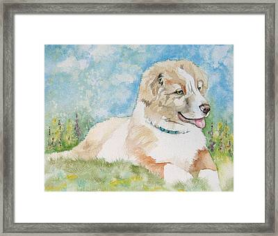 Hank Framed Print by Gina Hall
