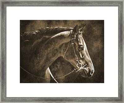 Hanoverian Horse In Sepia Framed Print