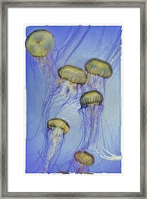 Happiness And Joy Framed Print by Lynn Andrews