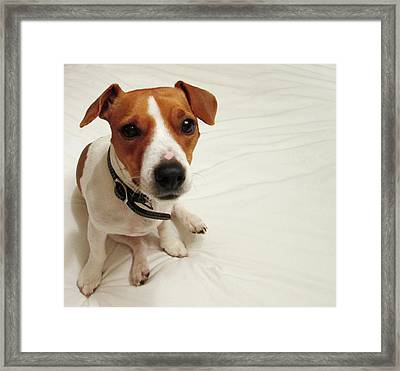 Happiness Is A Cute Puppy Framed Print