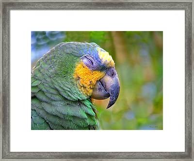 Happy 2 Framed Print